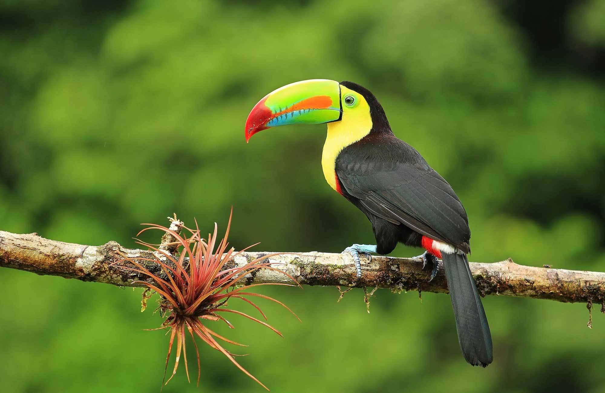 central-america-costa-rica-hornbill-bird-cover