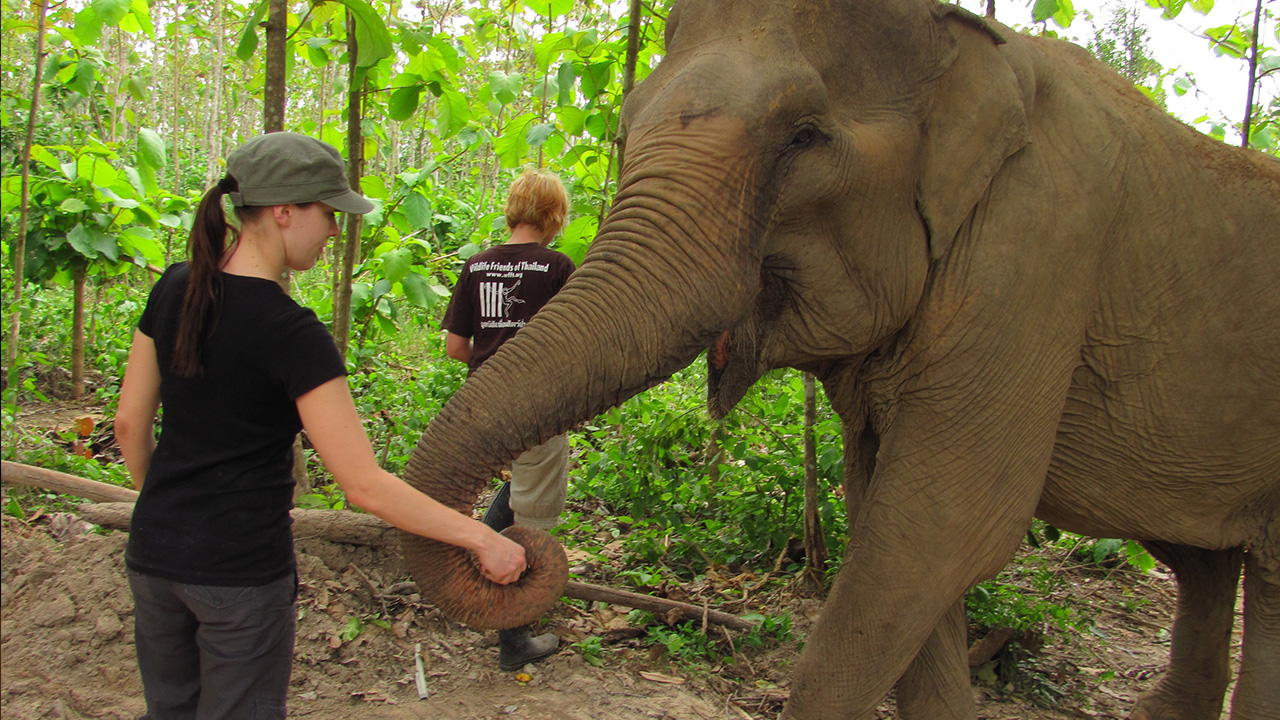 Volunteering with animals in Thailand | KILROY