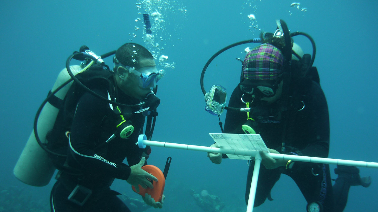 Volunteers diving underwater and doing surveys in central america